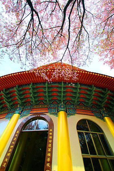 8天元宮櫻花之美