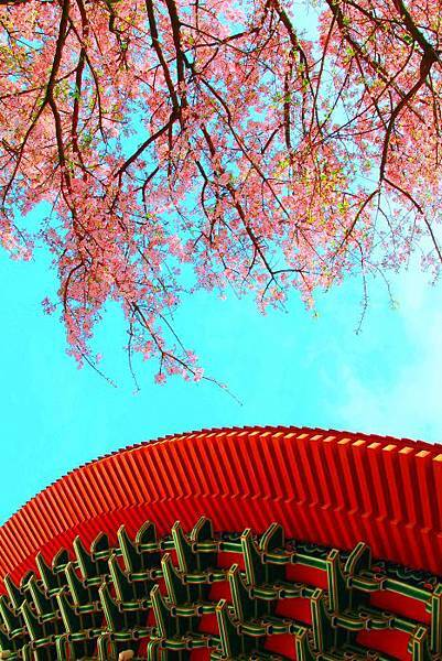 9天元宮櫻花之美