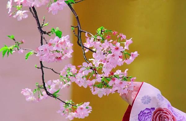 11天元宮櫻花之美