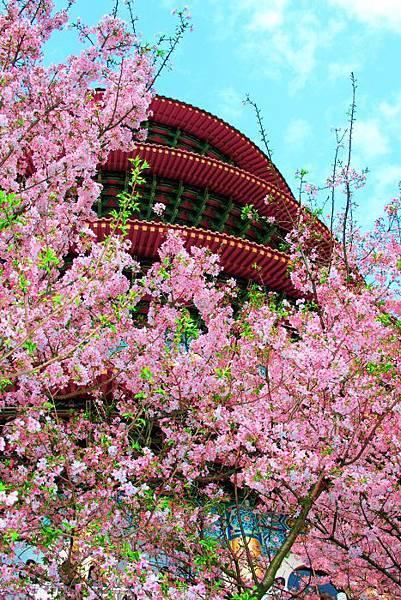 18天元宮櫻花之美