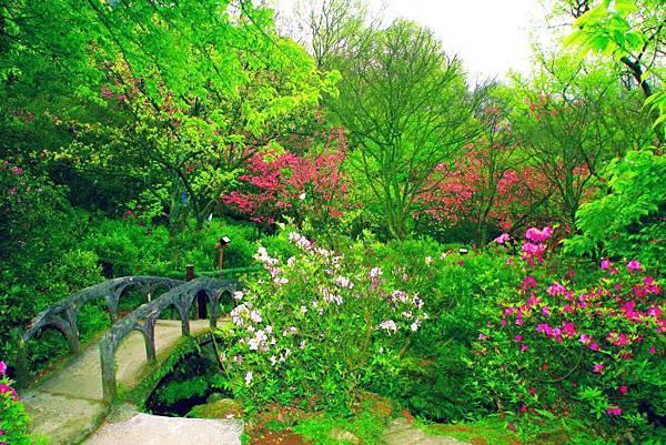42014年陽明山花季
