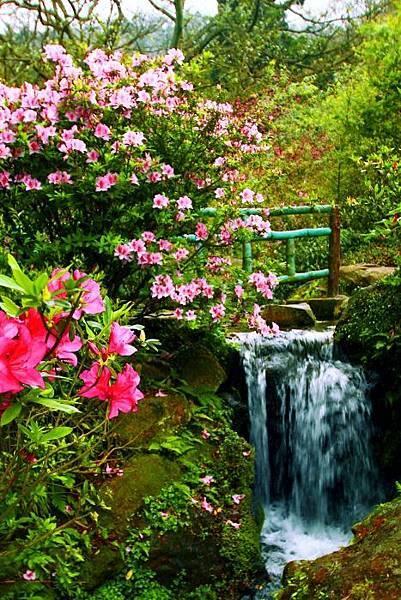 52014年陽明山花季