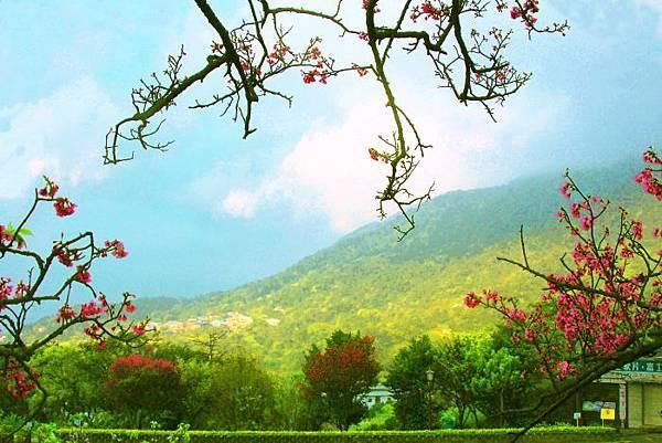 22014年陽明山花季