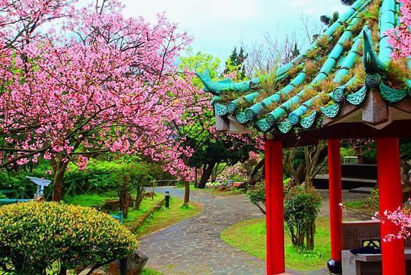 72014年陽明山花季