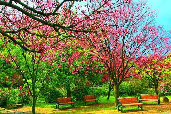 82014年陽明山花季