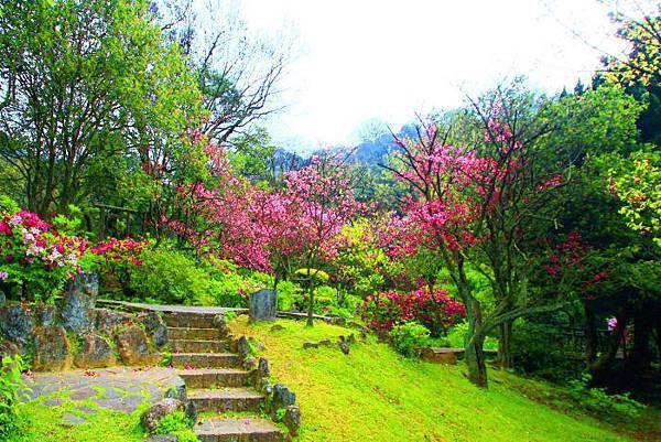 62014年陽明山花季