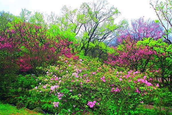 92014年陽明山花季