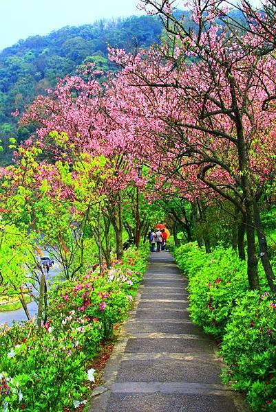 142014年陽明山花季