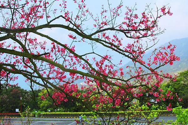 122014年陽明山花季