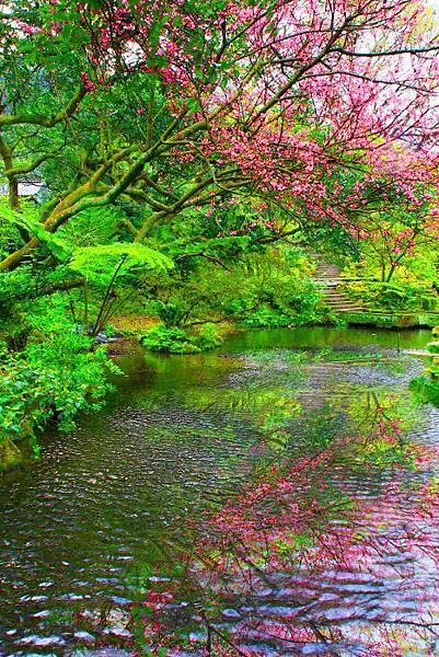 152014年陽明山花季