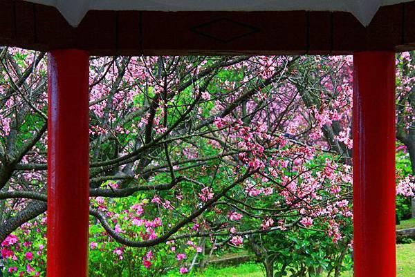 132014年陽明山花季