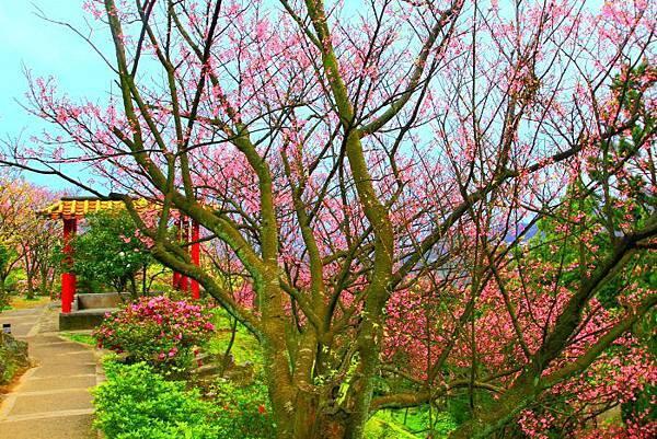 172014年陽明山花季