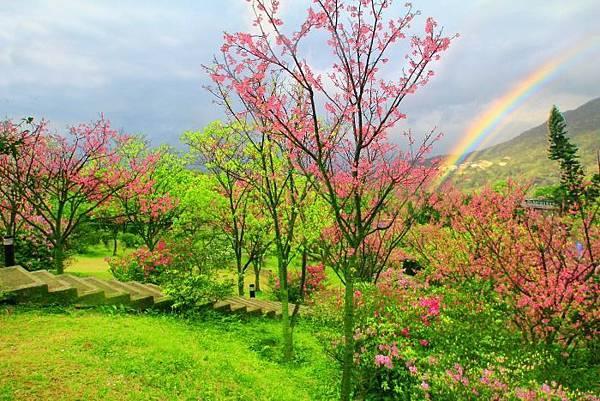 202014年陽明山花季