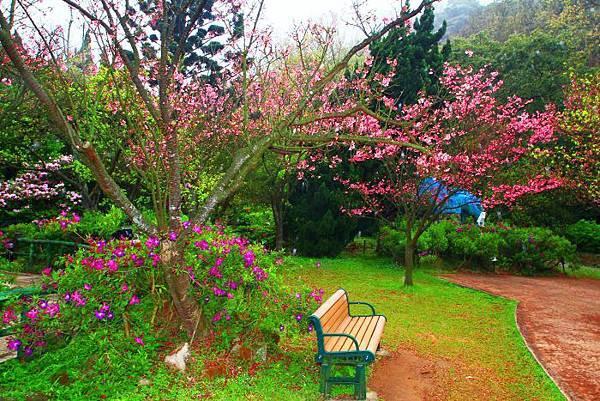 4陽明山花季2014