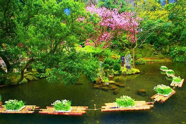 5陽明山花季2014