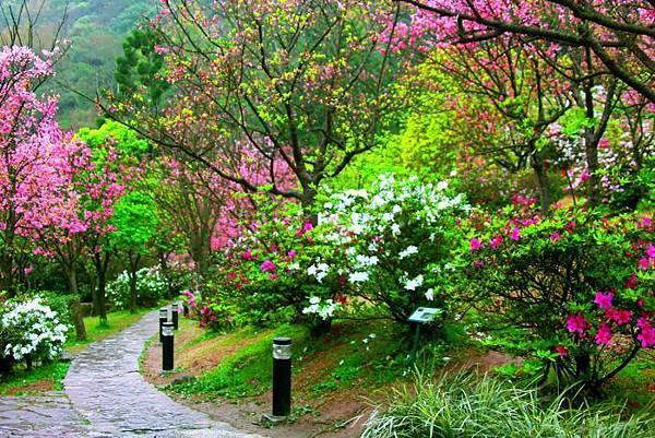 2陽明山花季2014