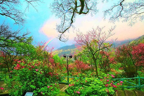 1陽明山花季2014