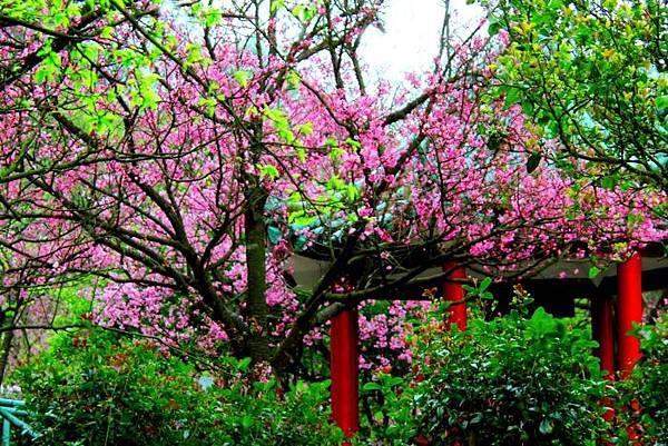 7陽明山花季2014
