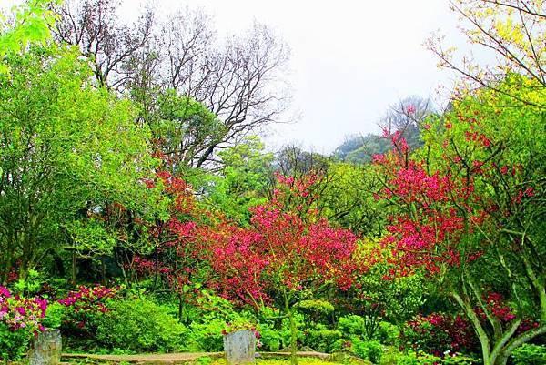 14陽明山花季2014