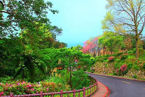 19陽明山花季2014