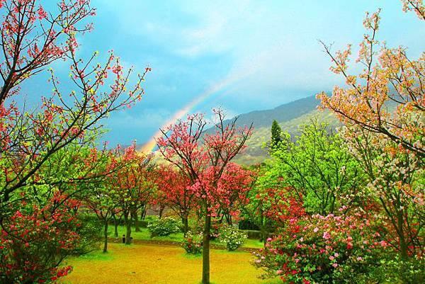 20陽明山花季2014