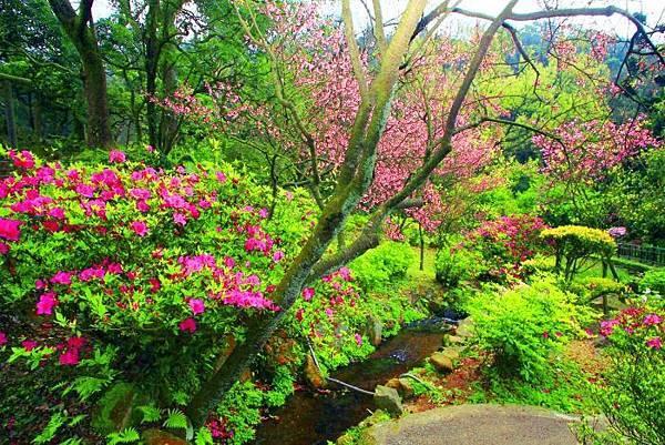 16陽明山花季2014