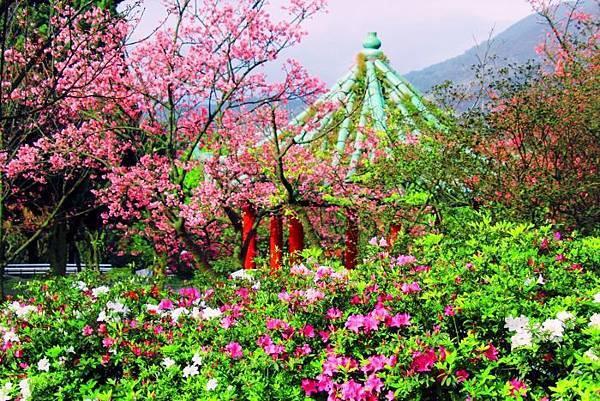 18陽明山花季2014