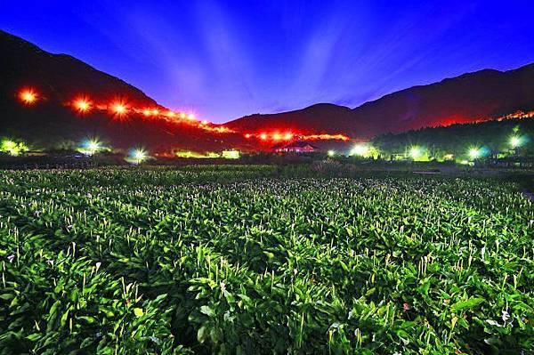 1陽明山竹子湖海芋