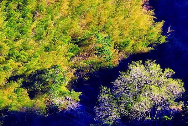 5竹林風韻之美