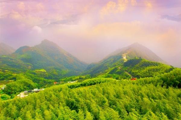 1竹林風韻之美