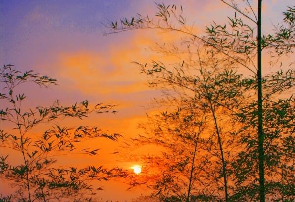 20竹林風韻之美