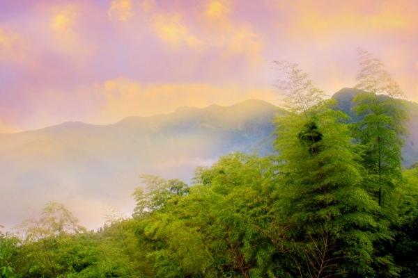 19竹林風韻之美