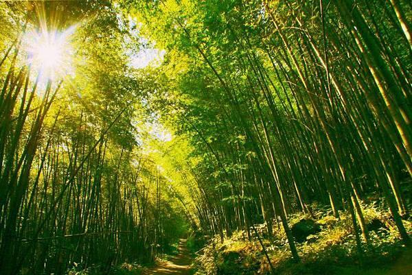 2竹林風韻之美