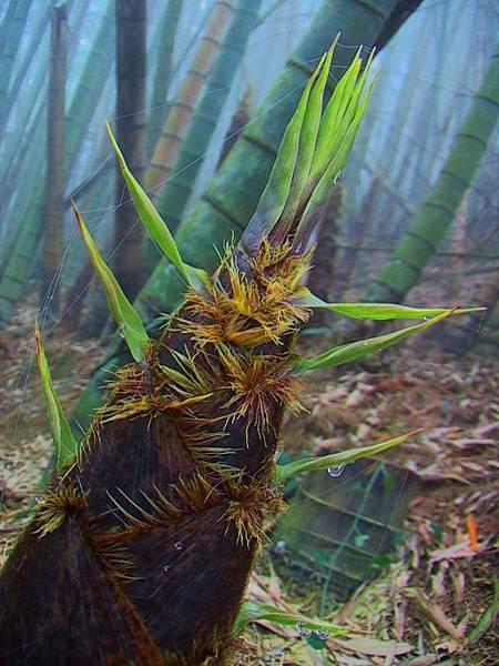 9竹林風韻之美