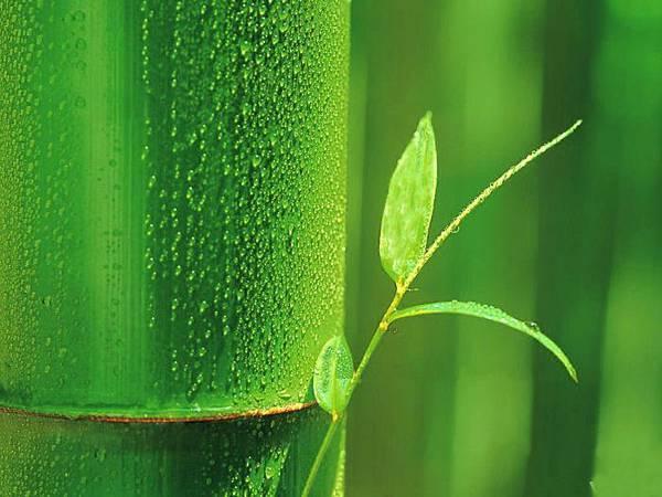 7竹林風韻之美