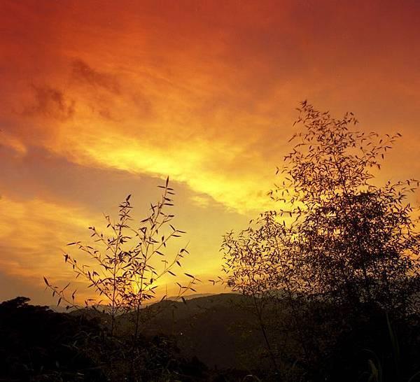 18竹林風韻之美
