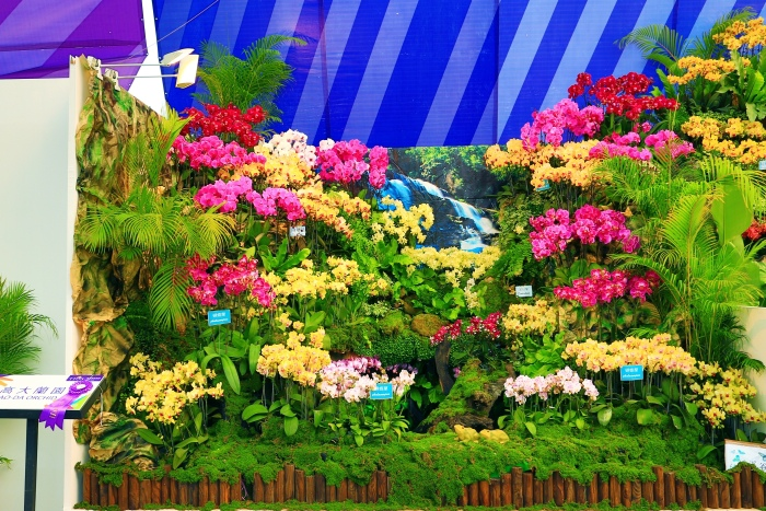 台南國際蘭展  (8)