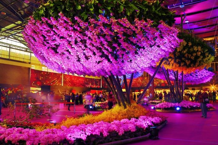 台南國際蘭展  (24)