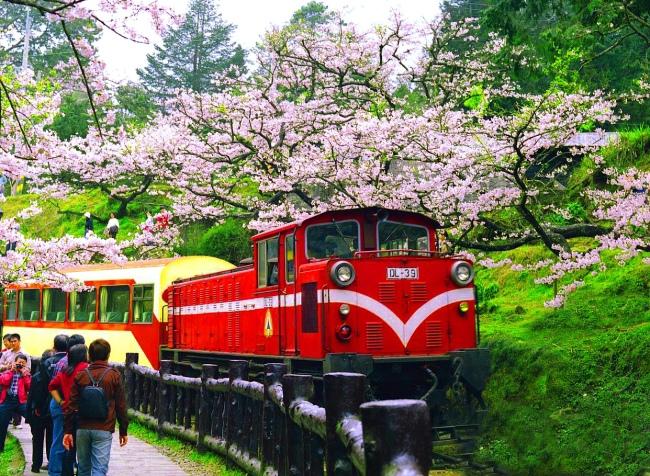 3觀光森林火車  五
