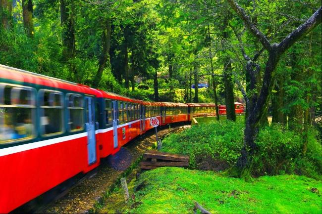 5觀光森林火車  五