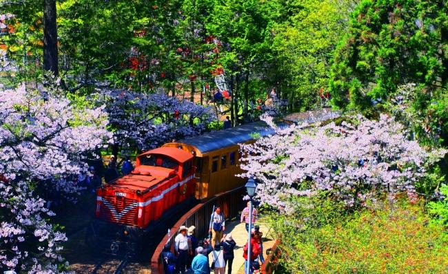 4觀光森林火車  五