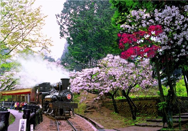 1觀光森林火車  五