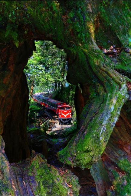 19 觀光森林火車  五