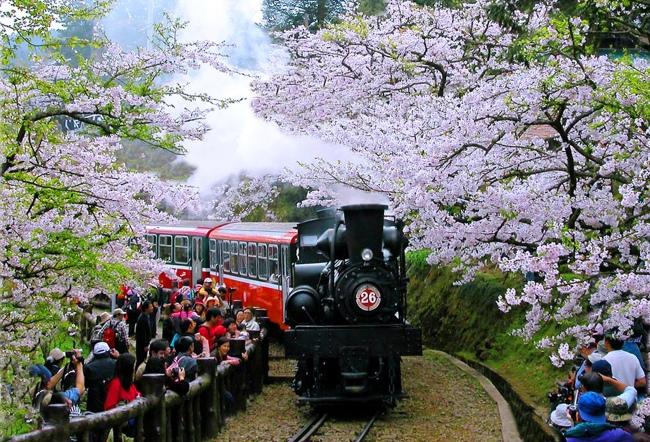 20觀光森林火車  五