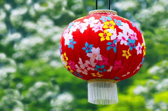 10五月雪油桐花之美一