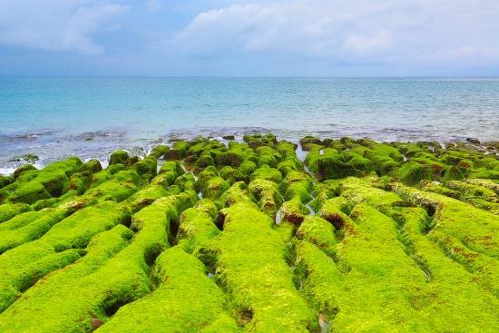 8老梅石槽  碧綠的精靈