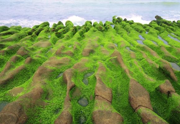 6老梅石槽碧綠的精靈