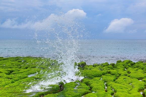 15老梅石槽碧綠的精靈