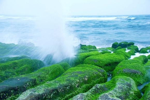 14老梅石槽碧綠的精靈