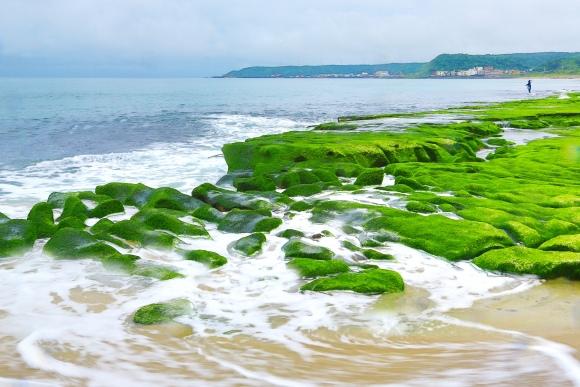 18老梅石槽碧綠的精靈